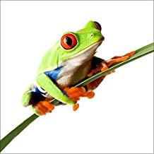 cuadro de rana de ojos rojos